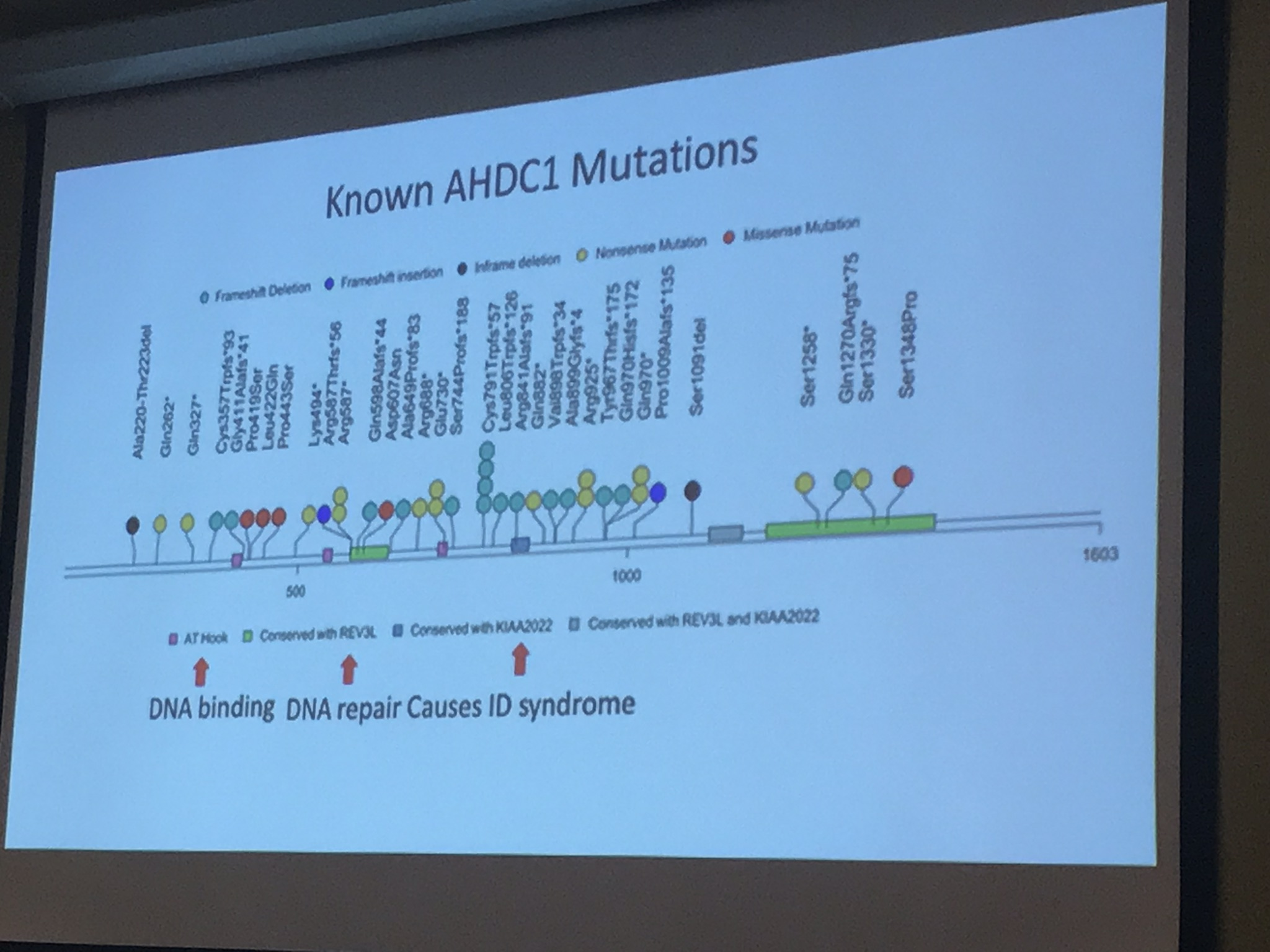 Slide showing information on AHDC1 mutations